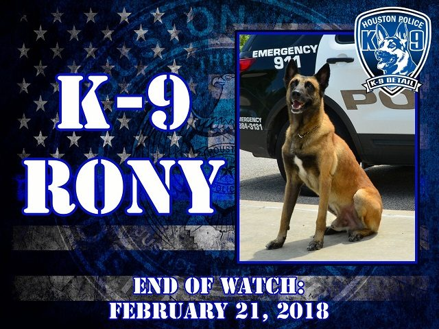 K-9 Rony had to be euthanized after breaking his leg in pursuit of a suspect.