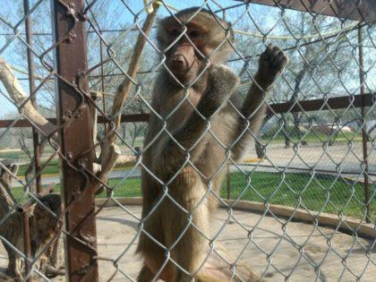 Narco Zoo