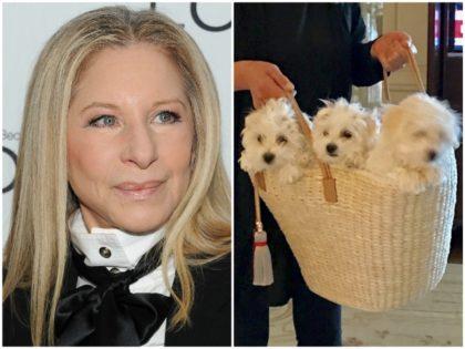 Streisand Dog Clones AP/Instagram