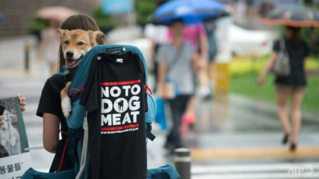 activists-have-stepped-up-long-running-campaigns-to-ban-dog-consumption-with-online-petitions-urging-boycotts-of-the-2018-pyeongchang-winter-olympics-over-the-issue-and-protests-in-seoul-1518086953251-4