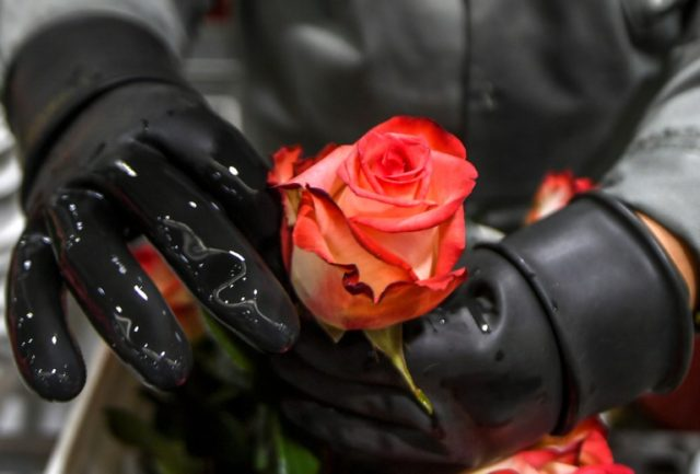 Valentine's Day on February 14 is a bonanza for Colombia, which is the source of 74 percent of US flower imports