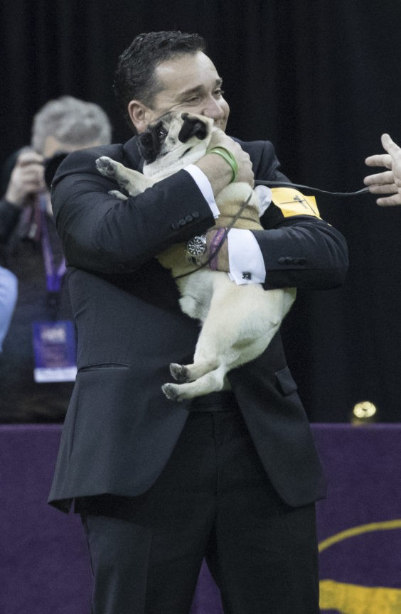The Latest: Big win for Biggie the pug at Westminster show