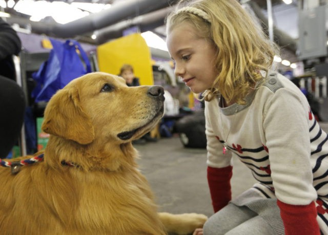 The Latest: Animal-rights groups decry Westminster dog show