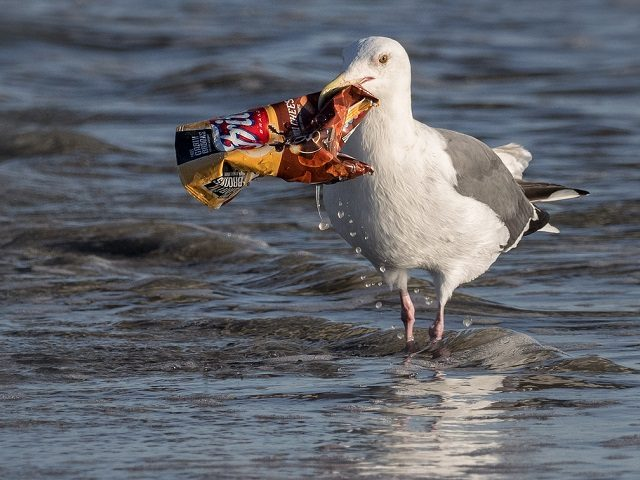 Great Pacific Garbage Patch Has Four Times the Mass as Previously Believed