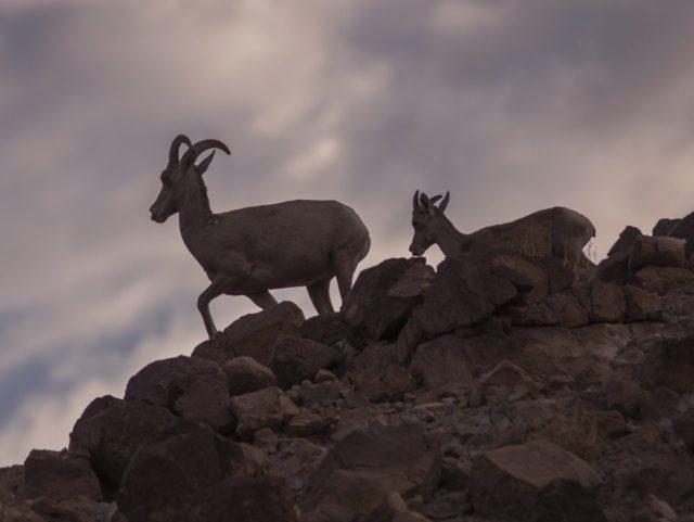 Mojave Trails (David McNew / Getty)