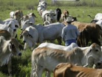 New York Times Proposes Taxing Beef to Combat Climate Change