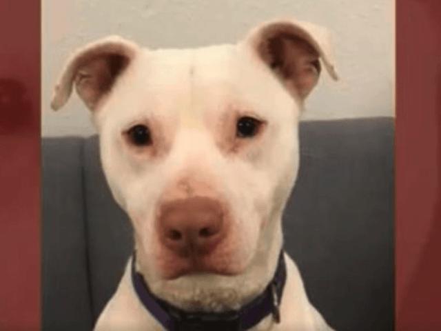 'Unadoptable' Dog Makes History as Washington's First Deaf ...