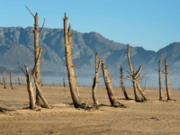 A picture taken on May 10, 2017 shows bare sand and dried tree trunks standing out at Theewaterskloof Dam, which has less than 20% of it's water capacity, near Villiersdorp, about 108km from Cape Town. South Africa's Western Cape region which includes Cape Town declared a drought disaster on May …