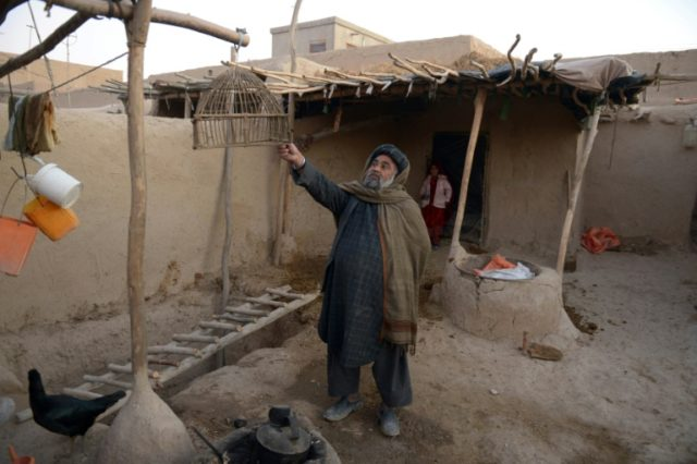 An Afghan Jogi man looks at an empty bird cage at his temporary home on the outskirts of Mazar-i-Sharif