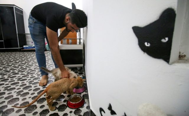 Ahmad Taher, a 24-year-old senior veterinary student, feeds cats at Iraq's first ever feline hotel in the southern city of Basra