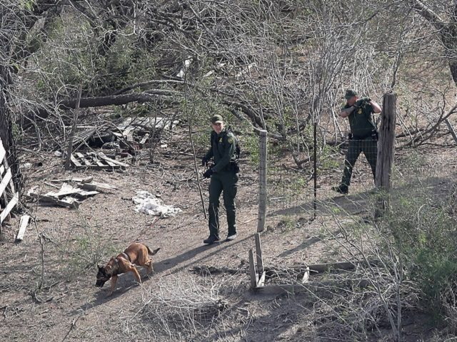 MCALLEN, TX - FEBRUARY 21: A U.S. Border Patrol K-9 unit tracks a group of undocumented immigrants by the U.S.-Mexico border on February 21, 2018 near McAllen, Texas. The agents were searching for a group who had just crossed the river from Mexico into Texas. (Photo by John Moore/Getty Images)