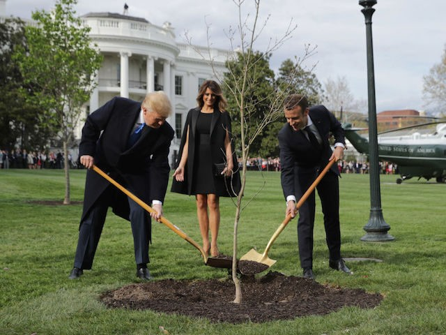 French President Presents Donald Trump with Tree from Belleau Woods