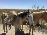 Mexican man used a pair of horses to smuggle marijuana and methamphetamine into the U.S. from Mexico, according to Border Patrol officials.