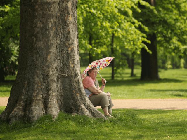 London Park Trees