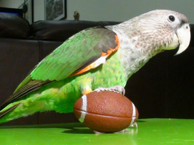 Screenshot Parrot