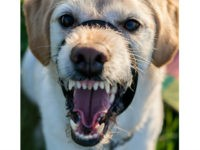 Homeopath Uses Rabid Dog Saliva to 'Treat' 4-Year-Old Boy's Temper