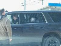 Dog 'Arrested' for Fighting a Deer
