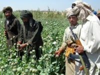 **FILE** A Taliban militant is seen with an AK- 47 rifle gun, right, as farmers collect resin from poppies in an opium poppy field in Naway district of Helmand province, southwest Afghanistan in a Friday, April 25, 2008 file photo. Drought and anti-drug campaigns helped slash Afghanistan's opium poppy cultivation …