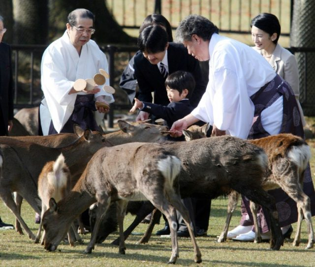 Japanese authorities have issued guidelines for feeding deer roaming the famous Nara Park