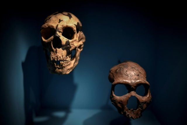 Neanderthals are thought to have needed up to 4,480 calories a day to keep them alive in the European winter -- some of their skulls have been on display as part of a Neanderthal exhibition at the Musee de l'Homme in Paris since last month