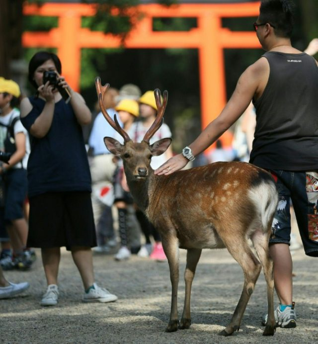 Oh deer: Japan park issues tips as animals nibble tourists