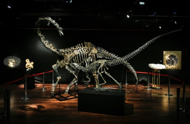 The same unnamed foreign buyer snapped up the skeletons of two late Jurassic dinosaurs -- a diplodocus (back) and an allosaurus (front) at the Drouot auction house in Paris