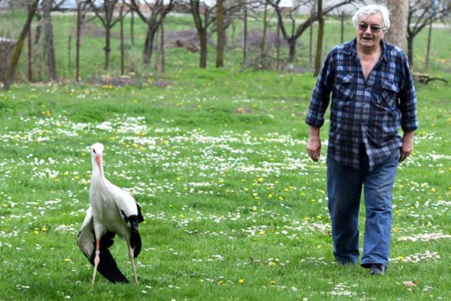 Stjepan Vokic looks after Malena the stork when her male mate Klepetan is migrating