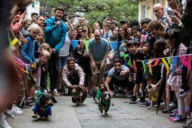 """Owners and their dogs take part in """"HK Doggie Dash 2018"""""""