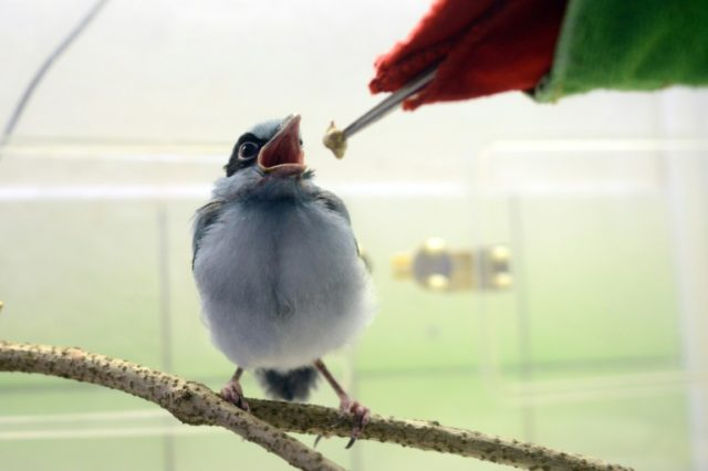 "Using a puppet resembling an adult bird to feed a newborn in captivity prevents the chick from ""imprinting"" on a human"