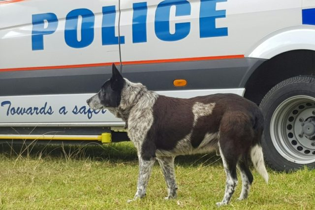 Max, a 17-year-old blue heeler, kept three-year-old Aurora safe overnight after she wandered more than a mile from their home