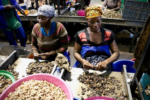 Mozambique's cashew industry is one of the biggest in the world