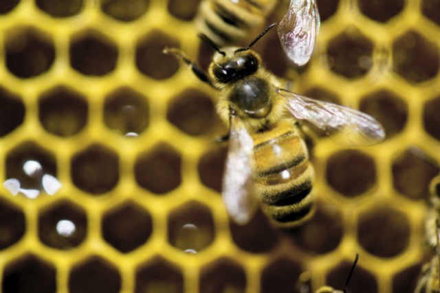 EU moves to full ban on pesticides that harm bees