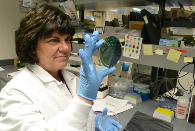 Genetic sleuthing bolsters food poisoning searches