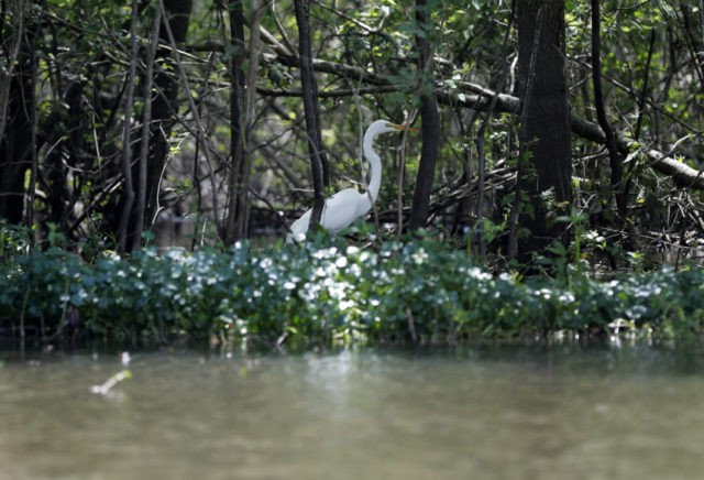 Federal judge skeptical about pipeline's impact on wetlands