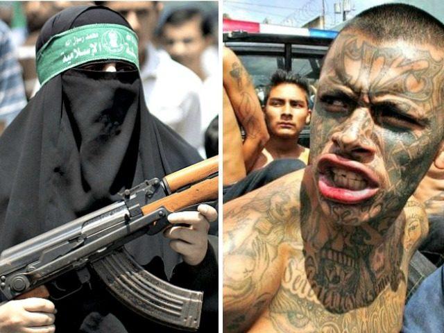 Hamas Terrorist:MS-13-gang-member