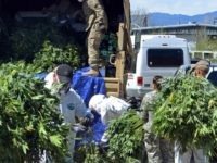 Marijuana Grow House Operation in Colorady - AP Photo - Solomon Banda