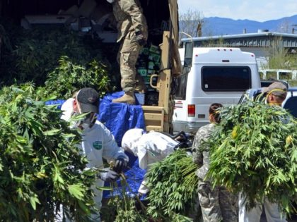 Marijuana Grow House Operation in Colorady - AP Photo - Solomon Banda
