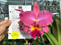 FLOTUS Flower Power: Award-Winning Orchid Named for Melania Trump