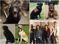 Members of Congress and military leaders joined American Humane to present four retired U.S. military dogs with K-9 Medal of Courage Awards last week on Capitol Hill.