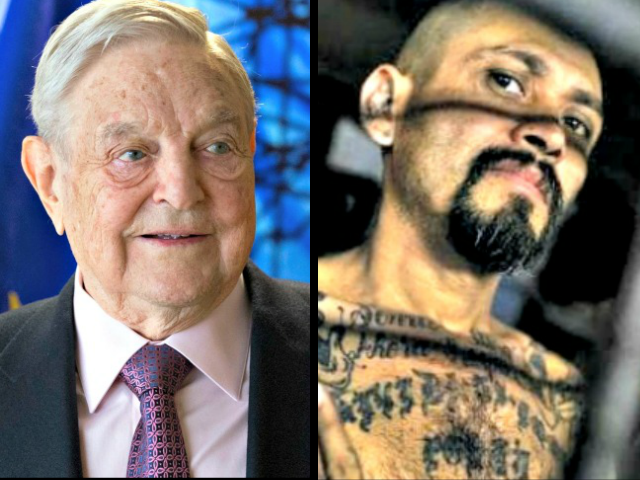Soros-Linked Group: Trump Is 'Racist' for Calling MS-13 Gang 'Animals'