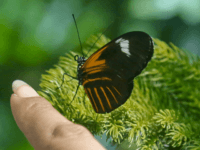 Climate Alarmists: 50 Percent of Insect Species to Lose Half Their Habitat by 2100