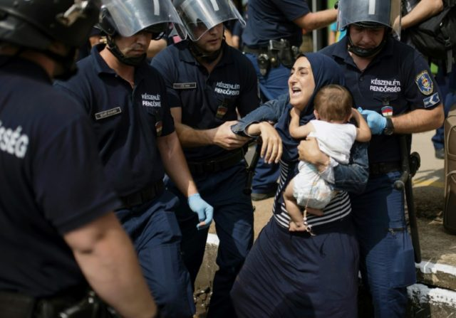Migrants are arrested by Hungarian police in Bicske, west of Budapest, as they attempt reach the Austrian border on September 3, 2015