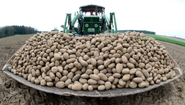 Sackfuls of trouble for a potato cartel