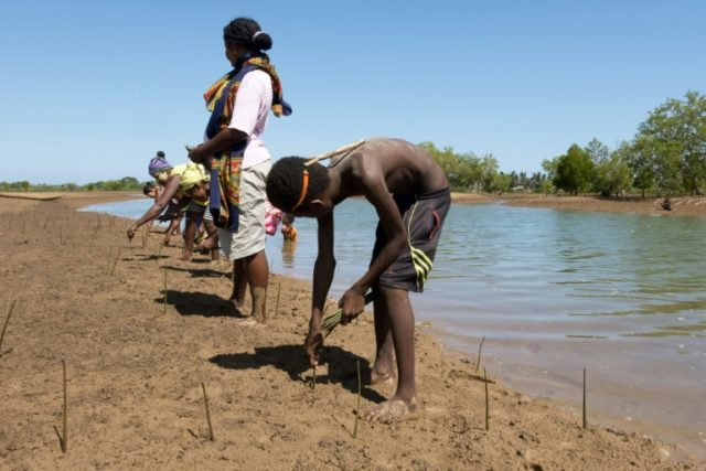 Volunteers replant dozens of mangrove propagules or shoots in a field near the village of Amboanio in the Melaky Region in Madagascar, part of a WWF programme to restore the mangroves.