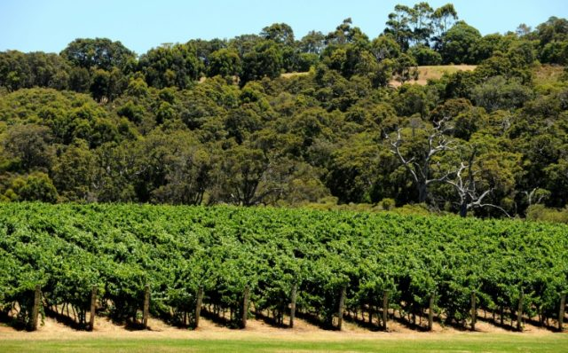 Australia's Margaret River wine region is the scene of a murder-suicide that shocked the country