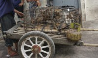 Stars urge Indonesia to ban 'brutal' trade in dog meat