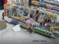 A Canadian woman's plan to escape the police for allegedly making a fraudulent purchase fell through after she came crashing down through a grocery store's ceiling.