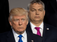 (L-R)US President Donald Trump and Prime Minister of of Hungary Viktor Orban stand during a family picture during the NATO (North Atlantic Treaty Organization) summit at the NATO headquarters, in Brussels, on May 25, 2017. / AFP PHOTO / POOL / Danny GYS (Photo credit should read DANNY GYS/AFP/Getty Images)