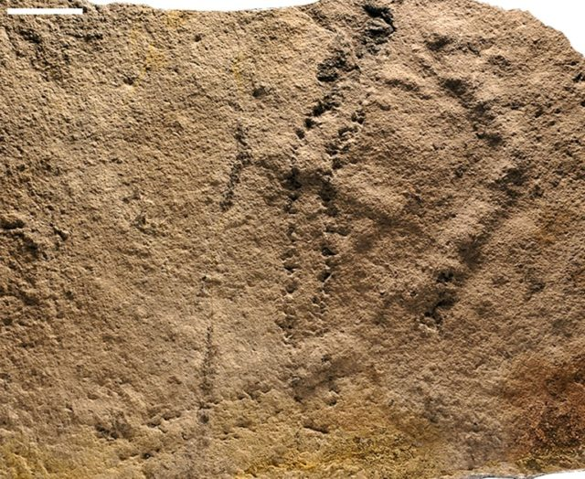 This image courtesy of Zhe Chen and Shuhai Xiao and released by Virginia Tech University on June 6, 2018, shows, the earliest known footprints left by an animal on Earth uncovered in China, and date back some 541 million years ago, a study said June 6