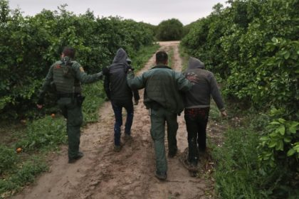 US Border Patrol agents detaining undocumented immigrants from Central America after capturing them in a grapefruit orchard near McAllen, Texas